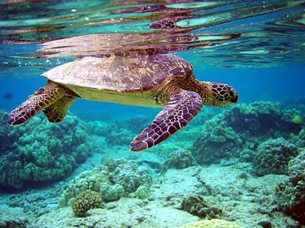 Totalreflexion av sköldpadda